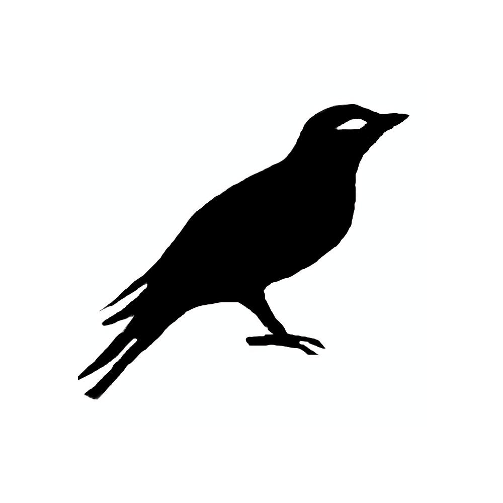 Bird2x big